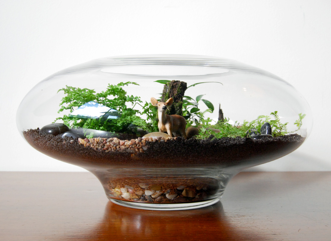 Terrarium Business for Sale